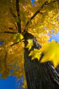 Autumn fall.