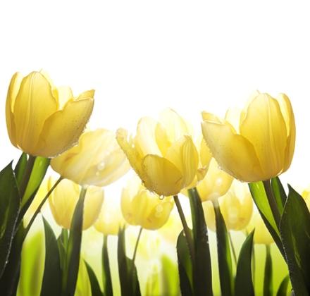 ExpertNewsletter_2015-5_daffodils