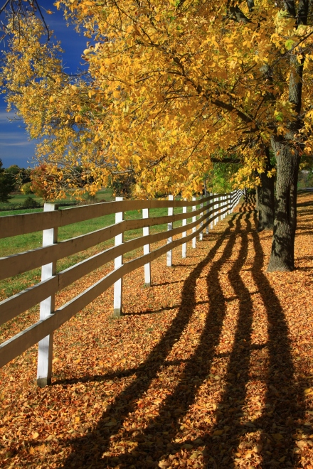 Fall Fence and Shadows - In this Vermont scene, the fence and shadows invites and draws the viewer into the image. (Canon 50d w/18-135mm, 1/250th sec @ f/10, ISO 200)
