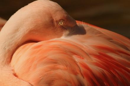 Flamingo Nap 2