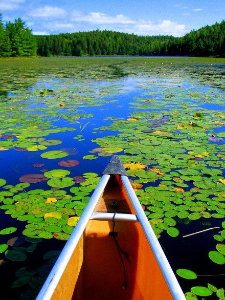 Leading the Way - It's hard to ignore where this canoe wants you to go. The bright colors and breaks in the pond lilies are pointing you straight into the Canadian wilderness. Would this have worked as well as a horizontal shot? (Canon PowerShot G3, 7mm, 1/640th sec @ f/4, ISO 200)