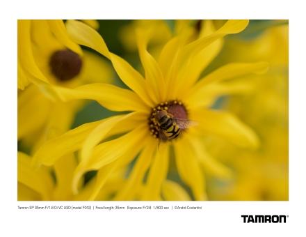 Tamron F012_Costantini 2